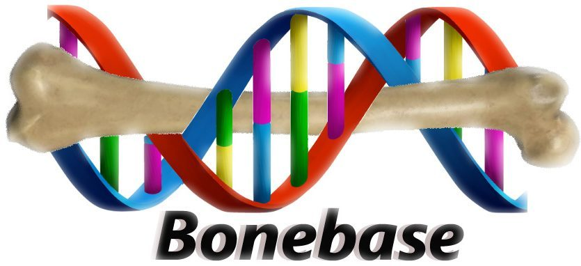Bonebase Logo